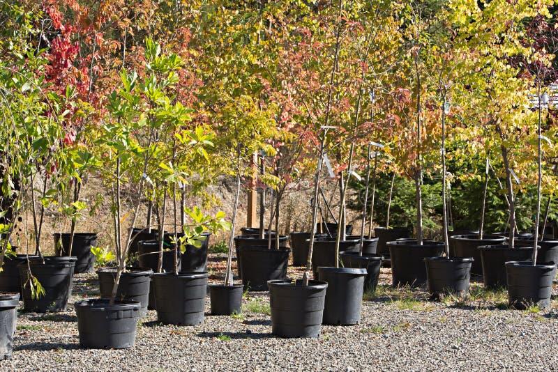 Ingemaakte Bomen bij het Kinderdagverblijf royalty-vrije stock foto
