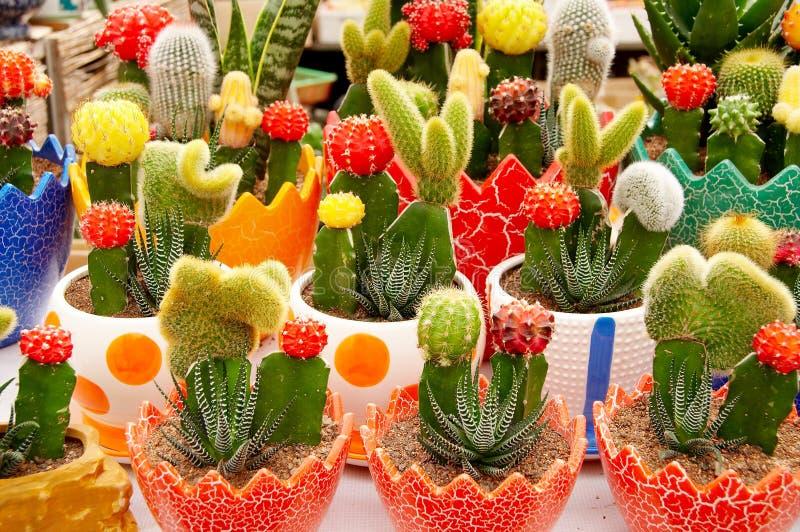Ingemaakte cactus royalty-vrije stock afbeeldingen