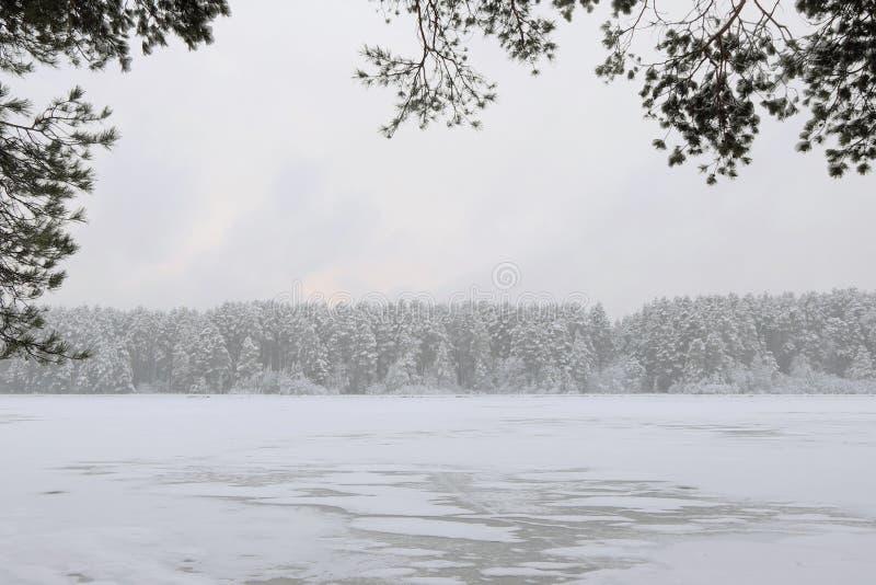 Ingesneeuwd bos voorbij de rivier royalty-vrije stock fotografie