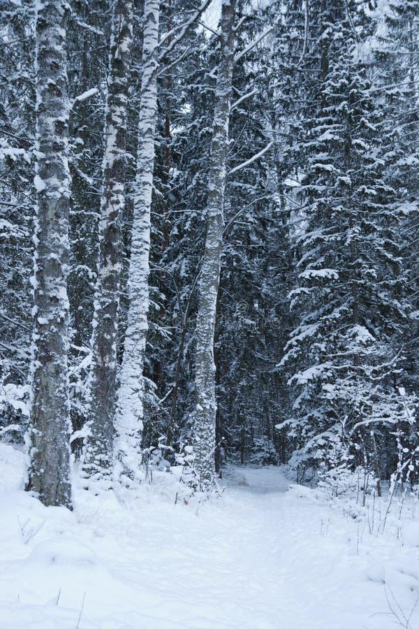 Ingesneeuwd de winterbos royalty-vrije stock fotografie