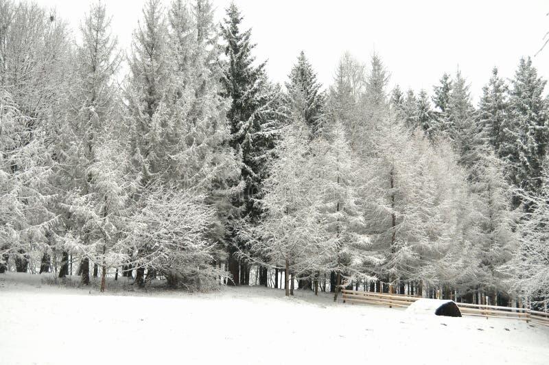 Ingesneeuwd de winterbos in donker Mooi de winterlandschap royalty-vrije stock foto