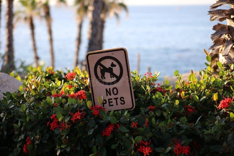 Inget husdjurtecken på strandsemesterorten royaltyfria bilder