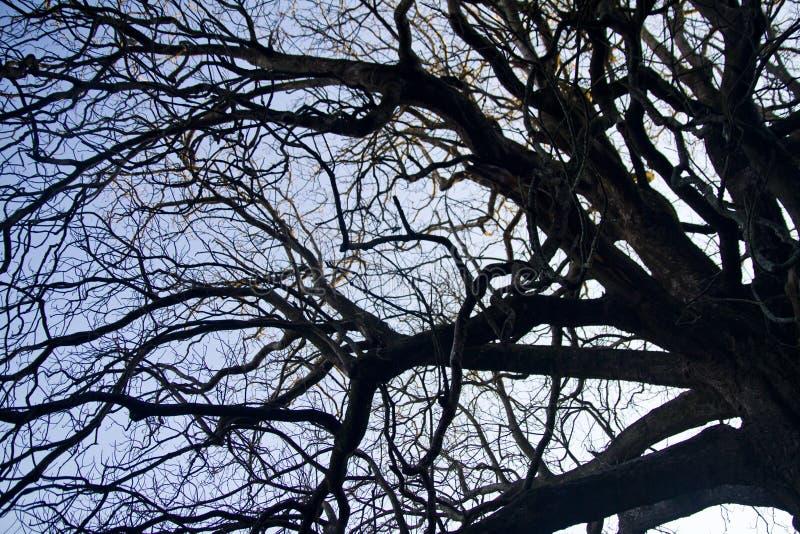 ingewikkeldheid op boomtakken royalty-vrije stock fotografie
