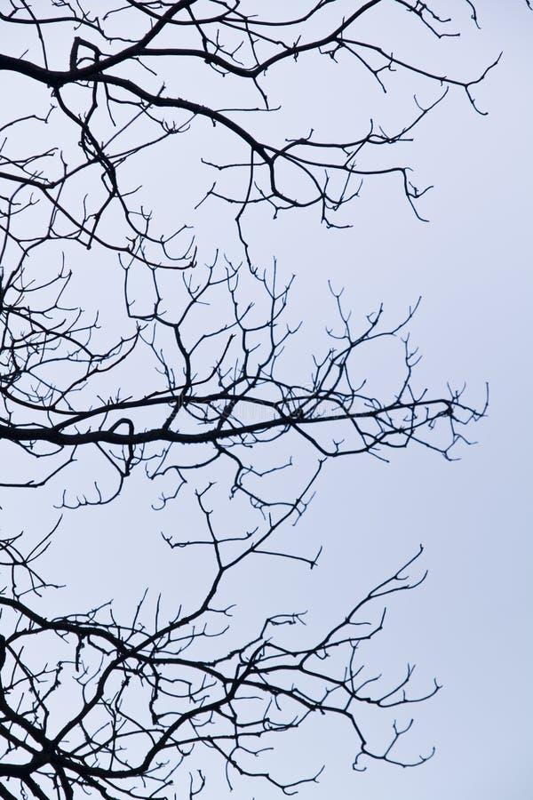 ingewikkeldheid op boomtakken stock afbeeldingen