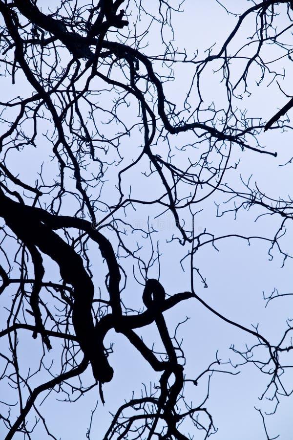 ingewikkeldheid op boomtakken royalty-vrije stock foto