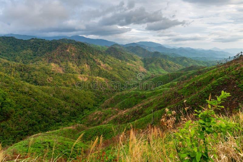 Ingewikkeldheid van van de berglandschap en boom diversiteit van bos met mooie lage wolken op bovenkant - onkruid en struiken in  royalty-vrije stock fotografie