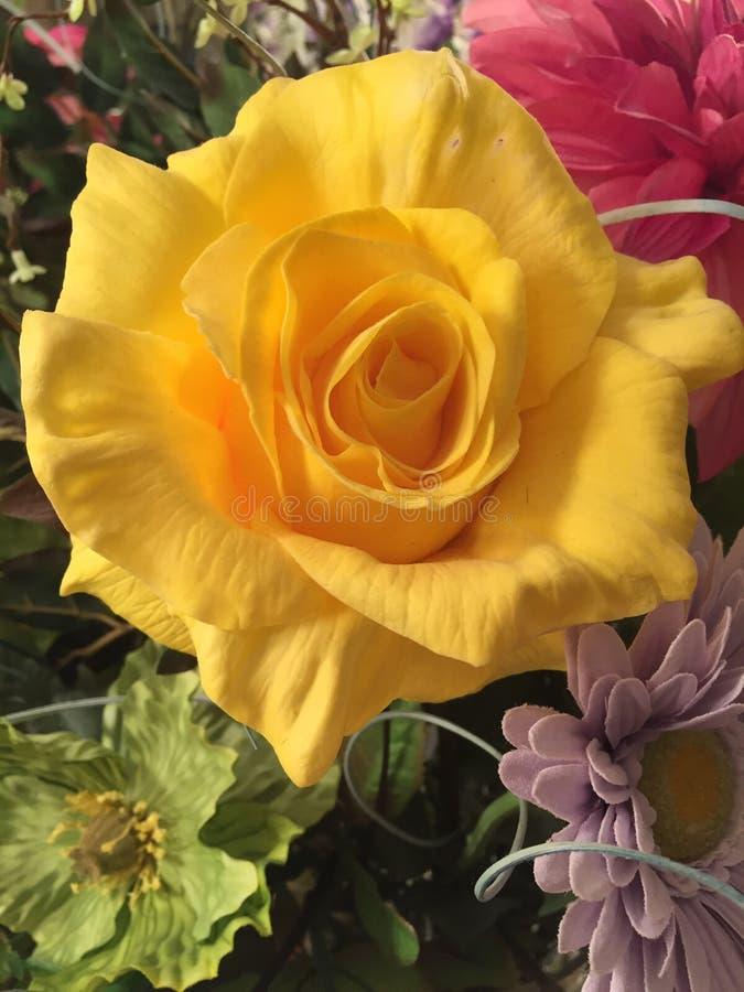 Ingiallisca di rosa fotografie stock libere da diritti