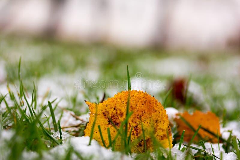 Ingiallisca la foglia caduta e la prima neve nel parco di autunno fotografia stock libera da diritti