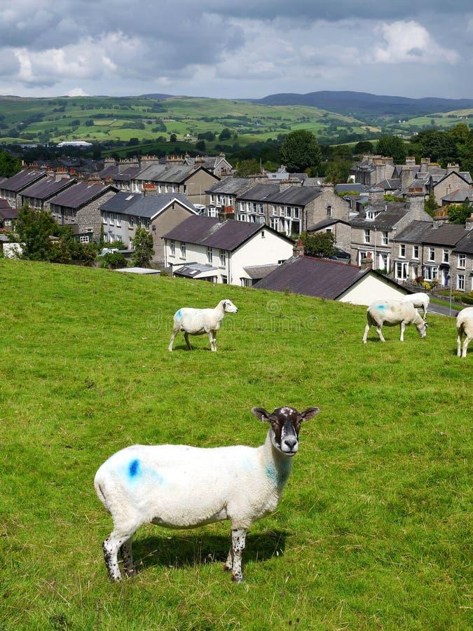 Inglaterra: casas de pedra do terraço com carneiros imagens de stock royalty free