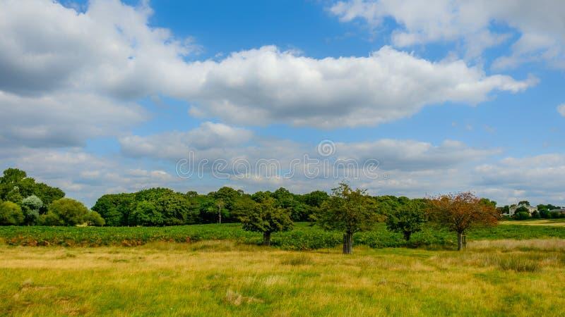 Inglaterra, Richmond Park-2 fotos de stock