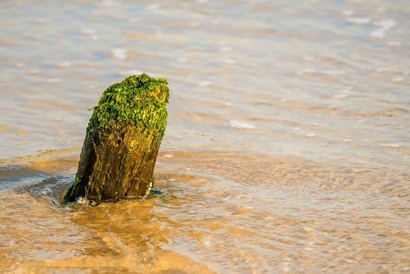 Ingle vieja en el mar Báltico imagen de archivo