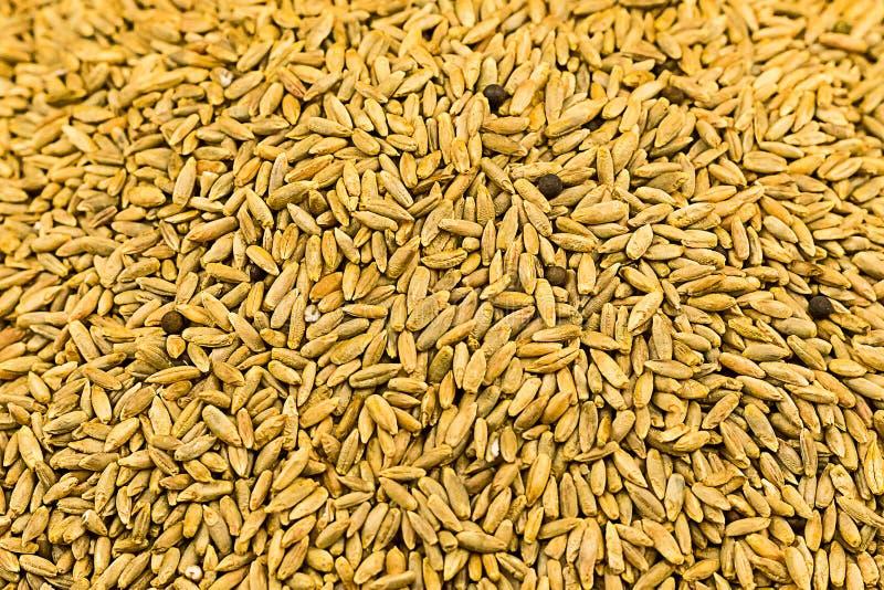 Ingrédients brun clair de millet de fond de grain longs brassant le site Web rustique de substrat d'eco de base de boulangerie de photo stock