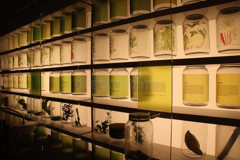 Ingrédients de nourriture tropicaux montrés au Musée National de Singapour photo libre de droits