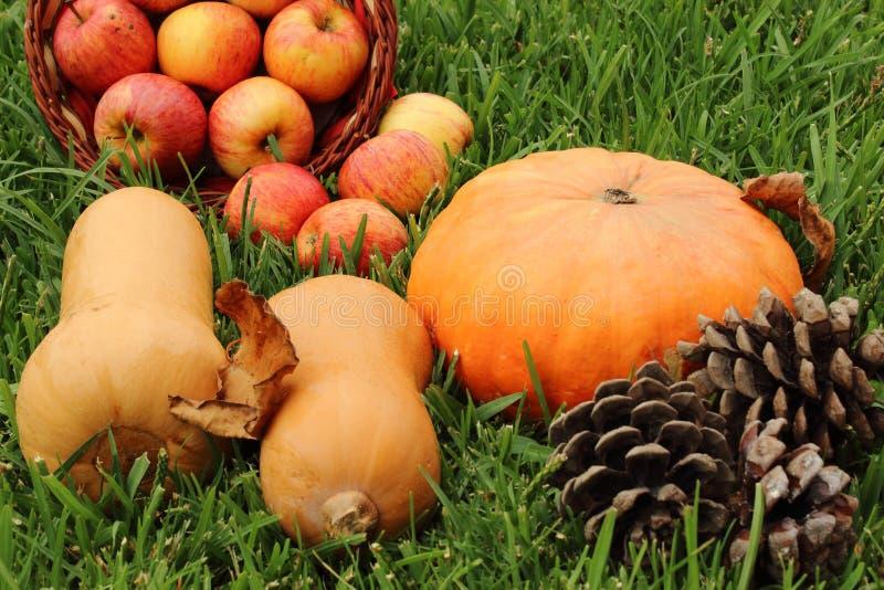 Ingrédients de thanksgiving dans l'herbe photos stock