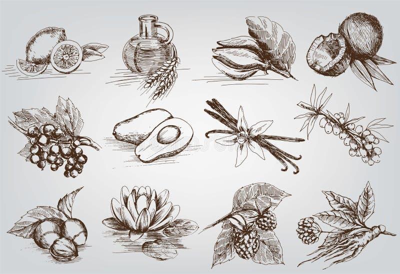 Ingrédients pour les cosmétiques naturels illustration libre de droits