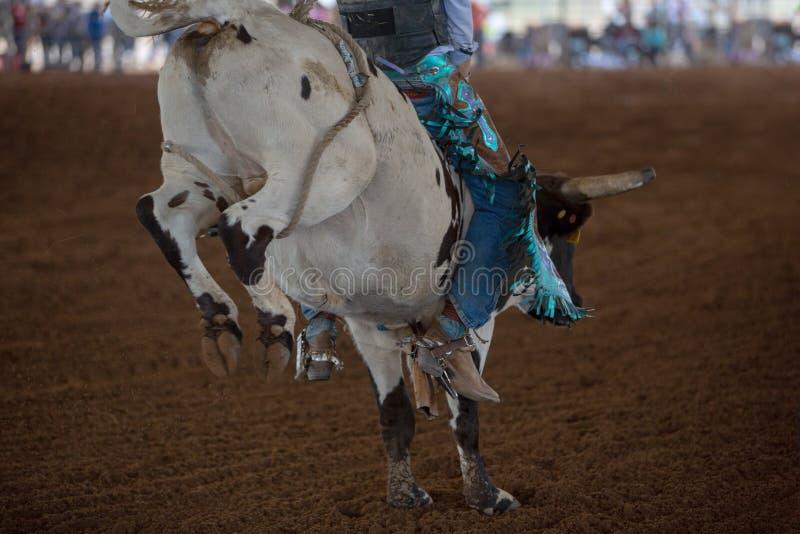 Ingranaggio variopinto di giovane cowboy Riding un vitello ad un rodeo immagini stock