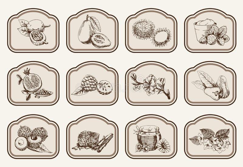 Ingrediënten voor natuurlijke schoonheidsmiddelen stock illustratie