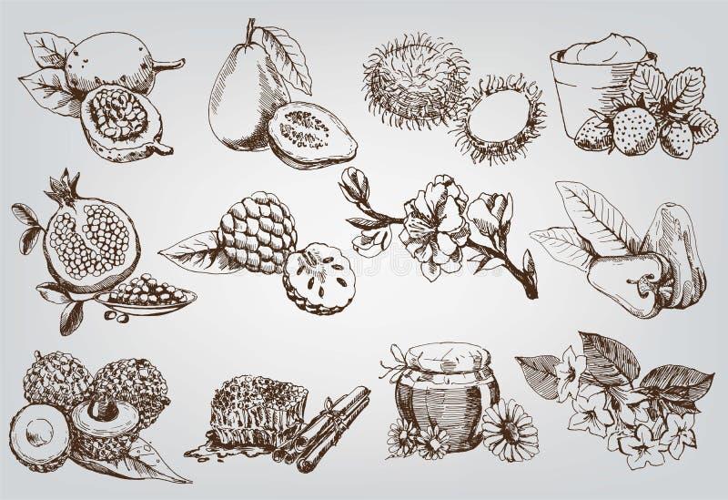 Ingrediënten voor natuurlijke schoonheidsmiddelen vector illustratie