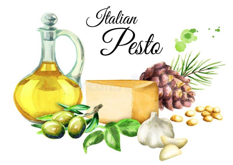 Ingrediënten voor saus Pesto, populaire Italiaanse kruidsaus Geïsoleerdj op witte achtergrond De illustratie van de waterverf vector illustratie