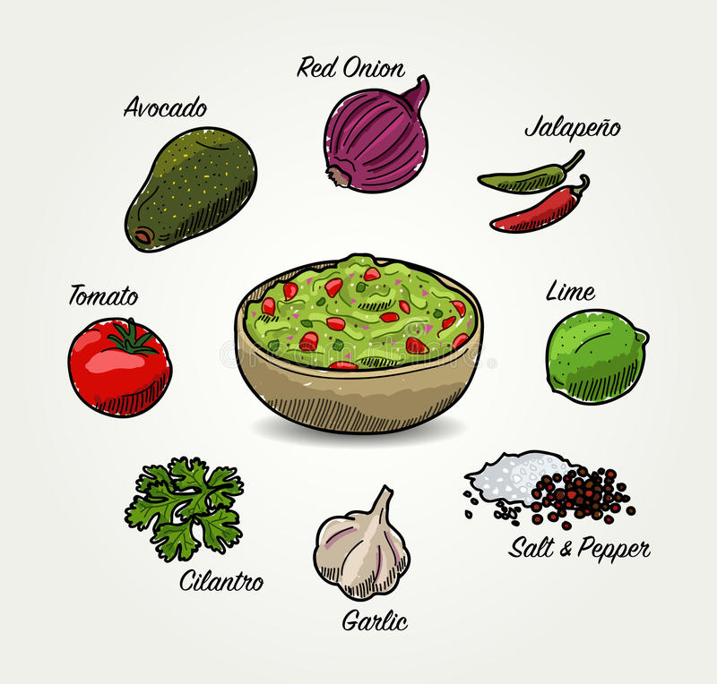 Ingredienser för vektoravokadoGuacamole stock illustrationer