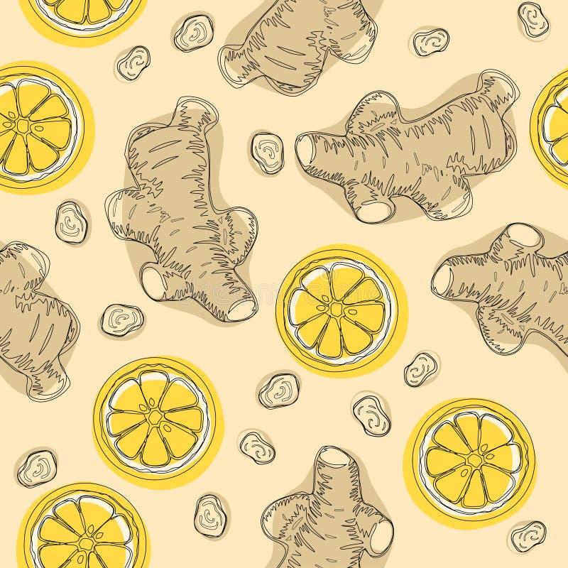 Ingrediente del drenaje de la mano para el té que se calienta Raíces enteras y cortadas del jengibre con el limón Vector el model ilustración del vector