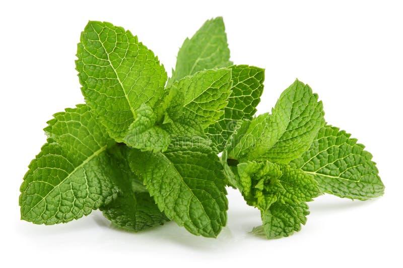 Ingrediente fresco das ervas do verde da hortel? da folha fotos de stock