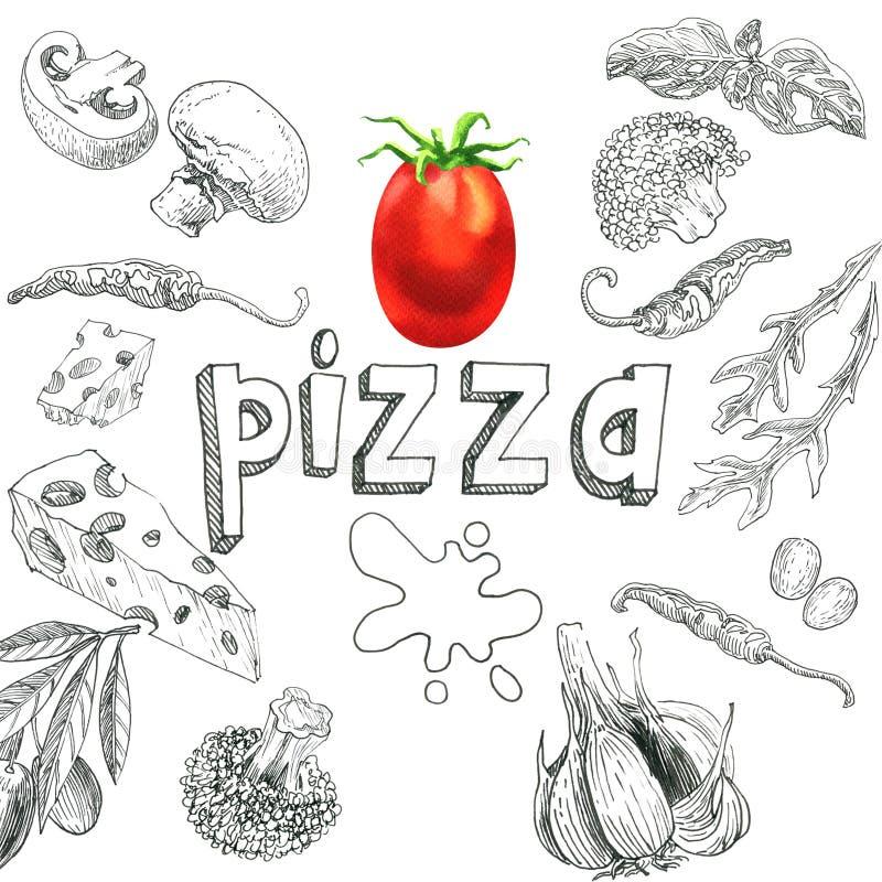 Ingredientes alimentarios para la pizza, sistema del bosquejo, tomate, setas, queso, pimientas, bróculi, arugula, albahaca, ajo,  ilustración del vector