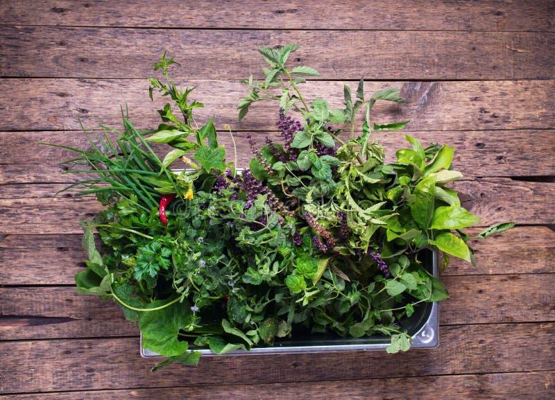 Ingredientes da culinária do alimento da bacia do metal das ervas das especiarias foto de stock