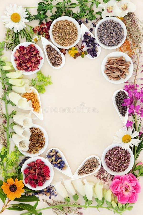 Ingredientes de la medicina herbaria fotos de archivo