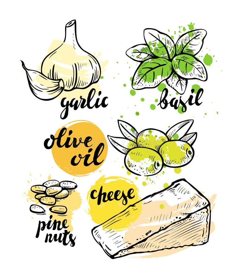 Ingredientes italianos para o pesto ilustração stock