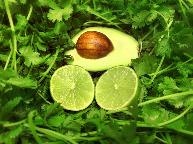 Ingredientes mexicanos da planta do vegetal e de fruto do coentro do cal do abacate do alimento para a festa da culinária imagens de stock