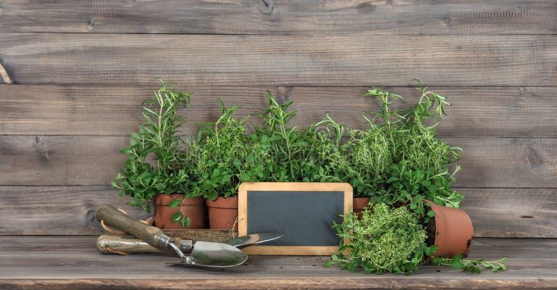 Ingredienti alimentari degli strumenti di giardino della lavagna delle piante aromatiche fotografia stock