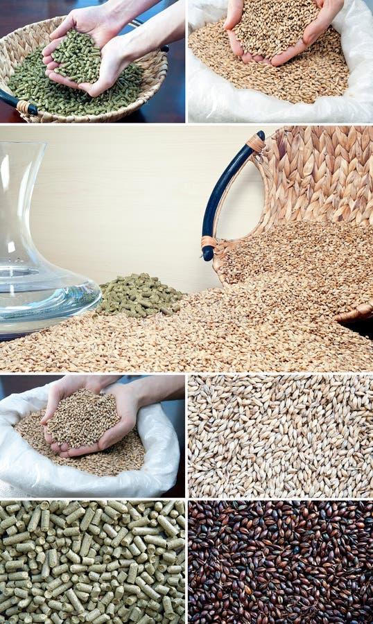 Ingredienti di fermentazione fotografia stock libera da diritti