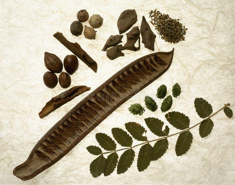 Ingredients for alternative medecine royalty free stock image
