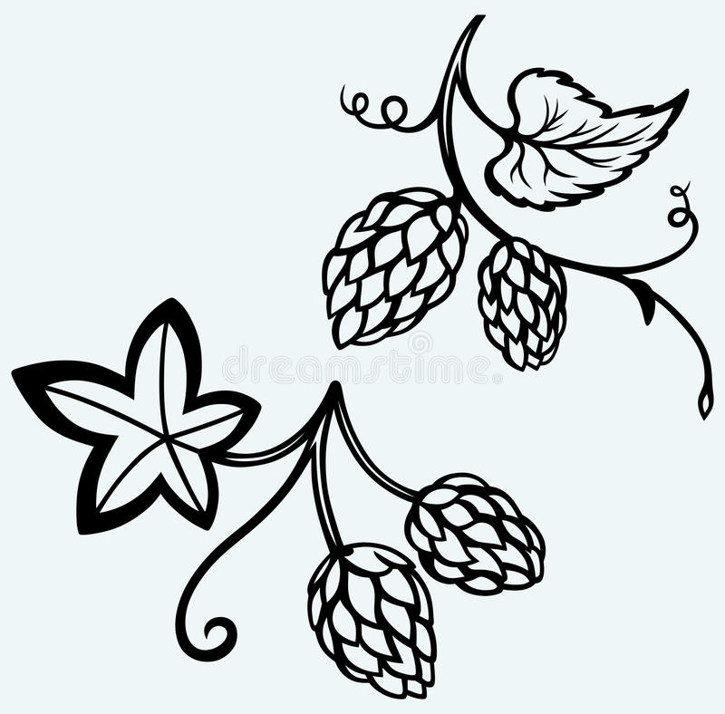 Ingredients for beer. Hops. Image isolated on blue background vector illustration