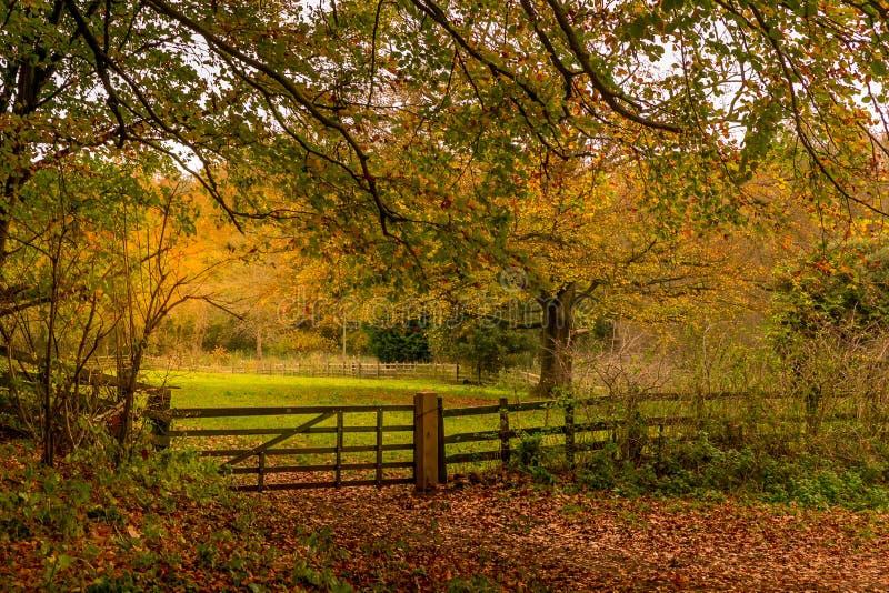 Ingresso in un terreno boscoso autunnale fotografia stock