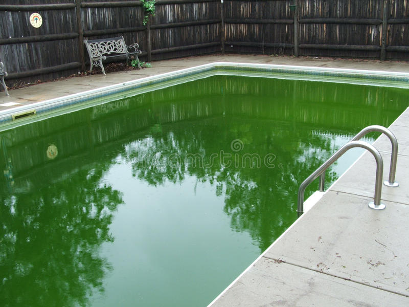 Inground pool green algae water stock photos