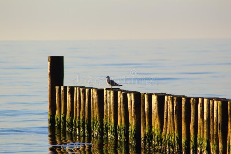 Inguine alla spiaggia del Mar Baltico del morskie del ustronie, Polonia nel sole di sera fotografia stock libera da diritti