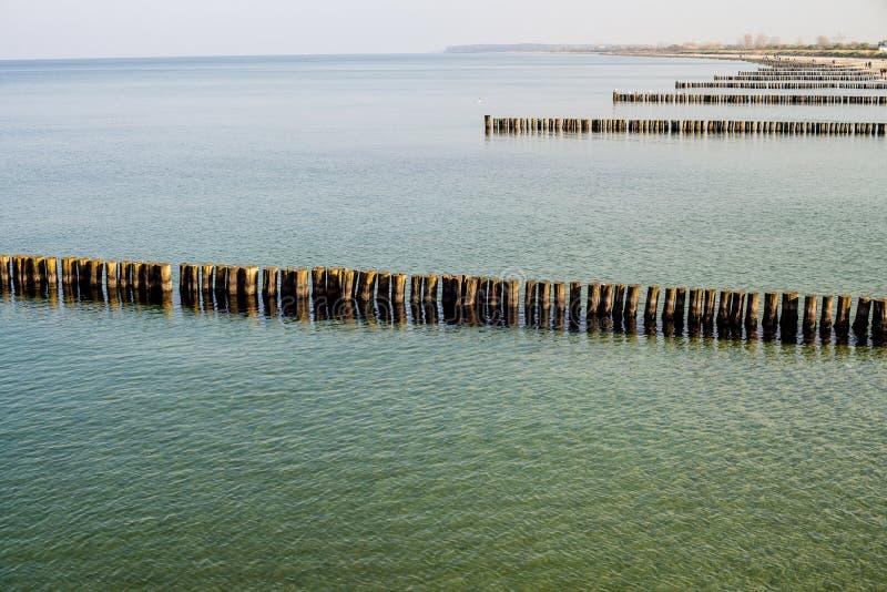 Inguini del Mar Baltico immagine stock libera da diritti