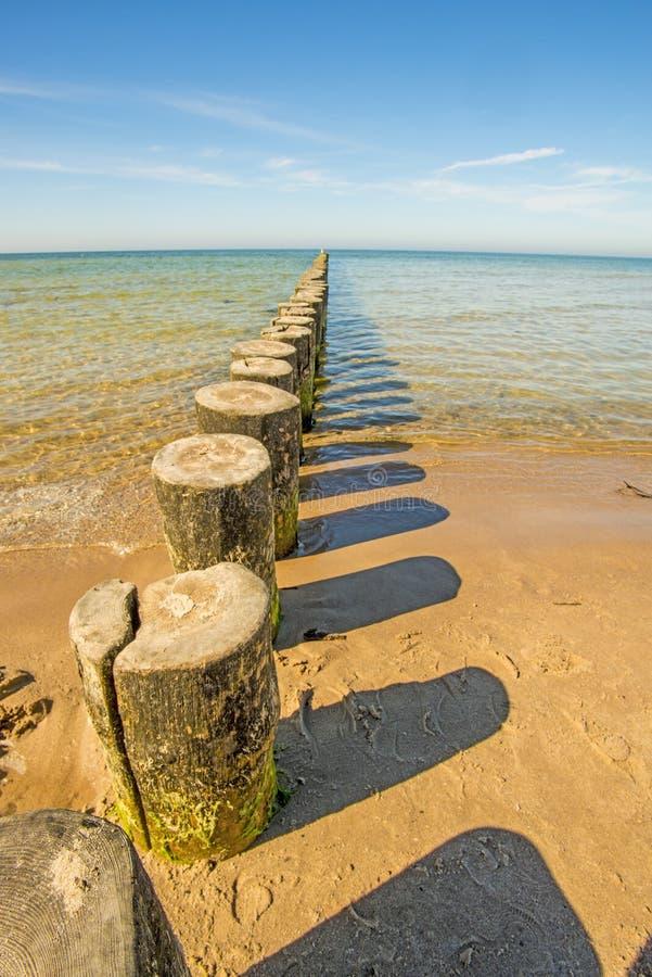 Inguini nel Mar Baltico fotografie stock libere da diritti