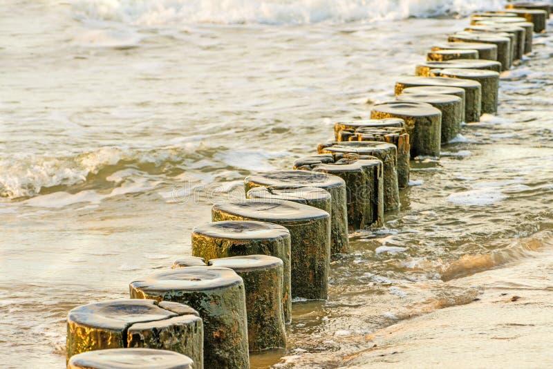 Inguini nel Mar Baltico fotografie stock