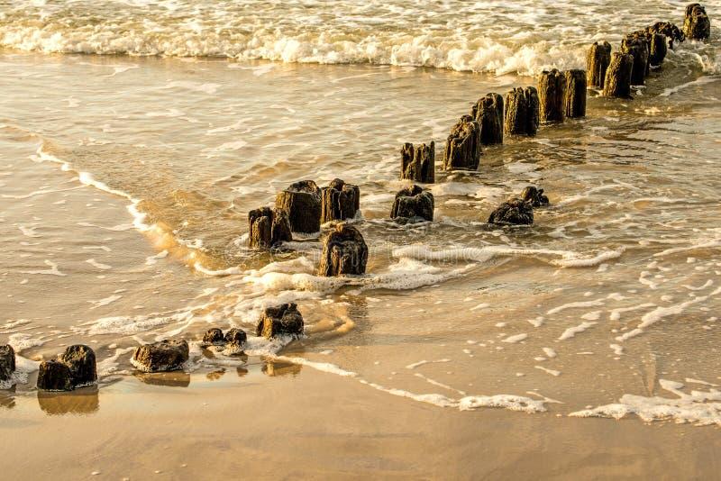 Inguini nel Mar Baltico fotografia stock
