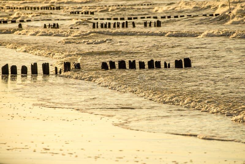 Inguini nel Mar Baltico con il sole uguagliante caldo immagini stock libere da diritti