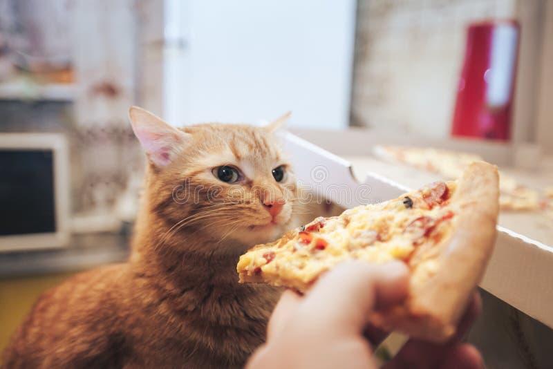 Ingwer und Pizza lizenzfreies stockbild