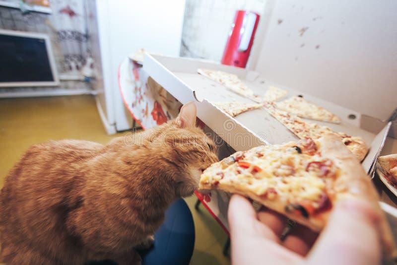 Ingwer und Pizza stockfotos