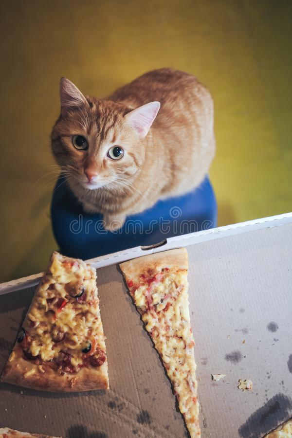 Ingwer und Pizza lizenzfreie stockfotos