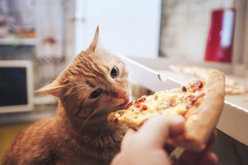 Ingwer und Pizza lizenzfreie stockfotografie