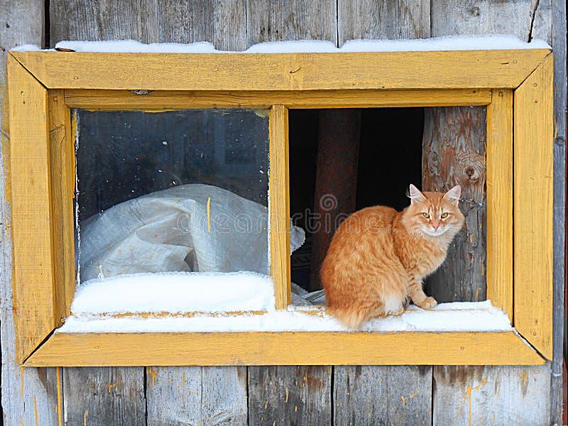 Ingwerkatze auf dem Fenster stockbild