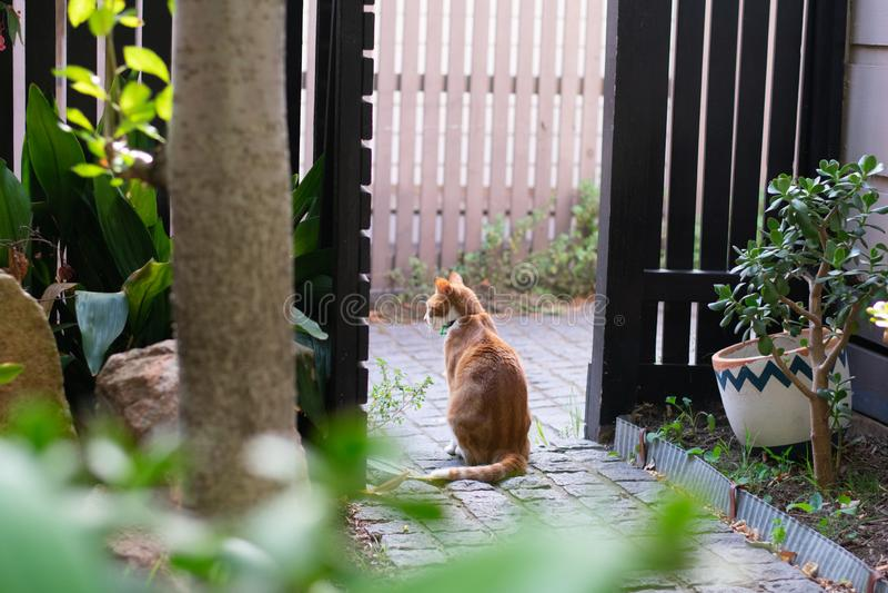 Ingwerkatze im Garten stockbild