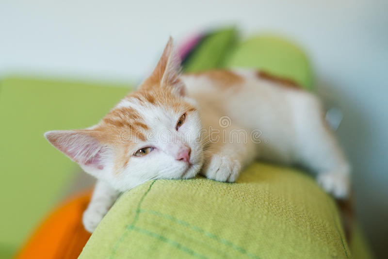 Ingwerkatzen-Miezekatzehaustier zu Hause auf dem Lügenc$schlafen des Couchsofas lizenzfreies stockbild